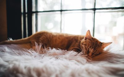 Guilty pleasures- the joy of the afternoon nap